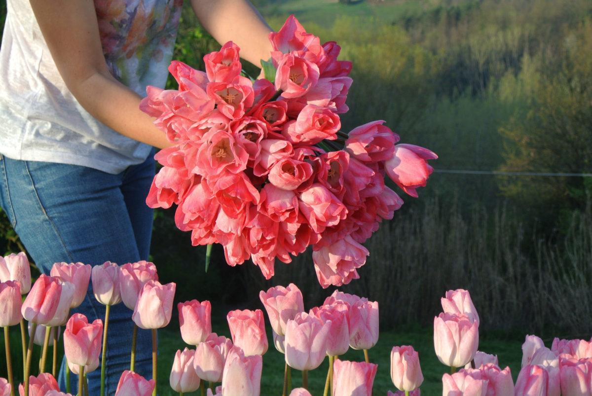 Coltivare Fiori Da Recidere fiori e composizioni di stagione - viale flower farm